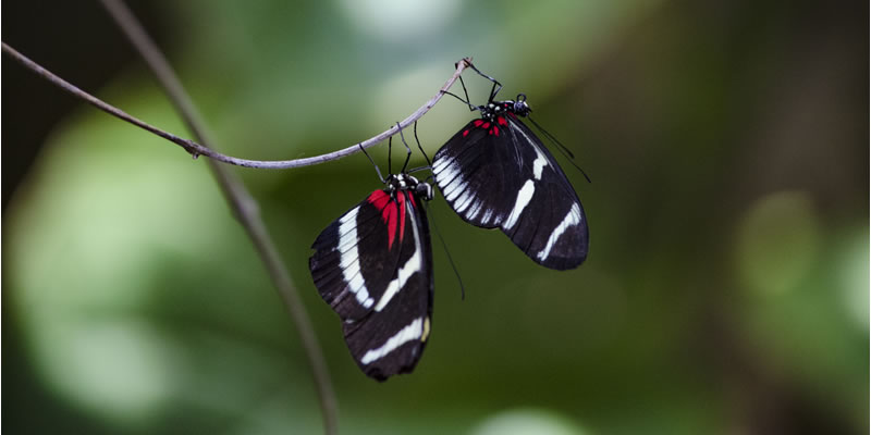 Two_Butterflie_20160104-184950_1